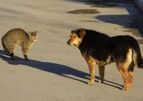 В Крыму хотят создать зоопатруль для защиты животных, фото — «Рекламы Коктебеля»