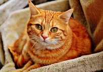 Category_cat-1046544_960_720