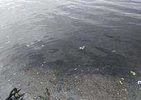 В море у Керчи, куда ассенизаторы слили канализацию, не нашли загрязнений - и разрешили купаться, фото — «Рекламы Ялты»