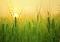 Category_barley-field-1684052_960_720