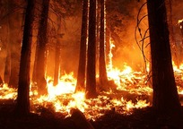 Category_wildfire-1105209_960_720