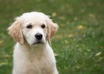 Category_dog-4390884_960_720