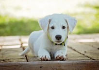 Category_puppy-1903313_960_720