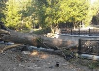 В Симферополе упавшее дерево разбило ограждение на набережной Салгира, фото — «Рекламы Алушты»