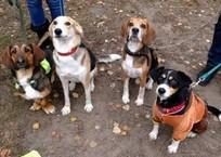 В Севастополе появится первая специализированная площадка для выгула собак, фото — «Рекламы Севастополя»