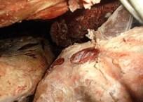 Севастопольский предприниматель закопал 2 тонны просроченного мяса у Монастырского шоссе, фото — «Рекламы Севастополя»
