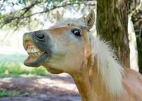 В Севастополе четырёхлетний ребёнок чудом выжил после нападения коня, фото — «Рекламы Севастополя»