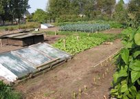 Category_moestuin_in_september_vegetable_garden-1024x76