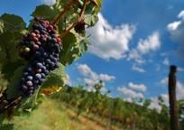 Category_70-protsentov-krymskih-vin-poddelka-ili-falsif
