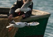 Жителя Балаклавы задержали за вылов рыбы, фото — «Рекламы Севастополя»