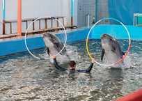 Карадагский дельфинарий в Крыму прекратил представления, фото — «Рекламы Щелкино»