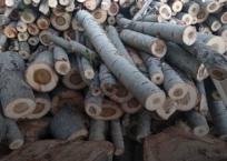 В Симферополе коммерсант спилил деревья ради парковки, фото — «Рекламы Крыма»