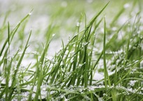 Category_grass-1877142_960_720