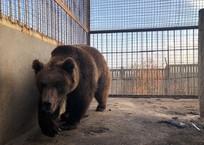 Спасенных от смерти медведей из Самары потеряли в Крыму, фото — «Рекламы Алупки»