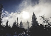 Category_forest-642116_960_720