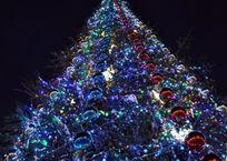 Главную новогоднюю елку Крыма откроют в День святого Николая, фото — «Рекламы Бахчисарая»
