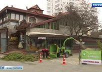 В Севастополе «Елковорот» решит проблему утилизации новогодних деревьев, фото — «Рекламы Севастополя»