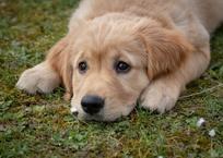 В Крыму сотрудники МЧС спасли собаку и щенка из теплотрассы, фото — «Рекламы Коктебеля»