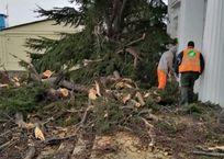 В Севастополе ветром повалило более десятка деревьев ФОТО, фото — «Рекламы Севастополя»