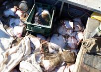 Крымские пограничники задержали украинских браконьеров в Азовском море, фото — «Рекламы Ялты»