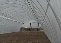 Фермеры Севастополя намерены собирать четыре урожая земляники в год, фото — «Рекламы Севастополя»