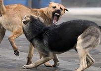 Вырвали кусок плоти: в Симферополе на мужчину напала стая бродячих собак ФОТО , фото — «Рекламы Крыма»