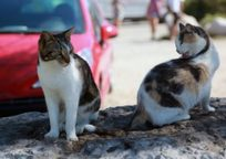 Category_cats_pets_france_canon_chats_europe_midi_ext_r