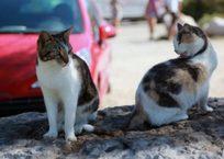 В Крыму намерены уберечь животных от жестокого обращения. Законодательно, фото — «Рекламы Белогорска»