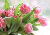 Category_tulips-4026273_1280