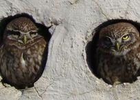 В Севастополе в соцсетях нашли фотографию птицы — «символа самоизоляции», фото — «Рекламы Севастополя»