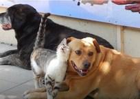 Коронавирус в Севастополе: режим работы и условия приема в ветеринарных клиниках города, фото — «Рекламы Севастополя»