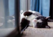 Thumb_cat-1903024_1280
