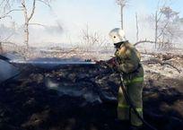В Севастополе на Фиоленте загорелся лес, фото — «Рекламы Севастополя»