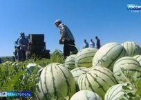 Когда в Севастополе снизятся цены на арбузы и дыни, фото — «Рекламы Севастополя»
