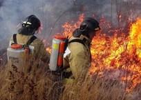 В Севастополе пожар в Гагаринском районе едва не охватил дома садоводов, фото — «Рекламы Севастополя»