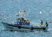 Традиции рыболовецкого флота возвращаются в Севастополь, фото — «Рекламы Севастополя»