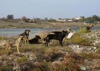 «Архипелаг собак»: стая животных облюбовала небольшой остров в Севастополе, фото — «Рекламы Севастополя»