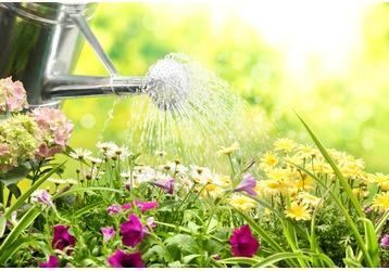 Мокрое дело: как правильно поливать огород в жару, фото — «Реклама Крыма»
