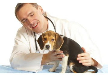 Ветеринарные клиники Севастополя: адреса и контакты, фото — «Реклама Севастополя»