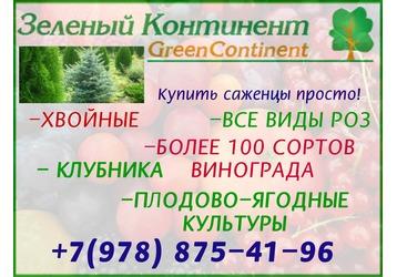 Саженцы: плодово-ягодные, хвойные деревья, декоративные растения. Удобрения для сада и огорода, фото — «Реклама Крыма»