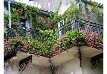 Озеленение балконов в Севастополе - что надо знать, фото — «Реклама Севастополя»
