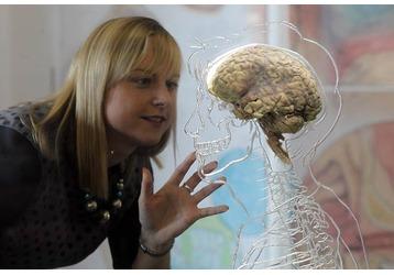 К 30-ти годам мозг начинает умирать?!, фото — «Реклама Севастополя»