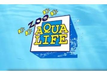 Аквариумные рыбки, все для аквариумистики и рыбалки в Симферополе – зоомаркет «Aqualife», фото — «Реклама Крыма»