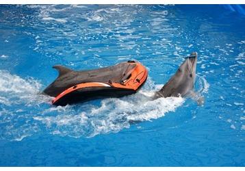 Дельфинарий в Севастополе – увлекательное шоу и плаванье с дельфинами!, фото — «Реклама Севастополя»