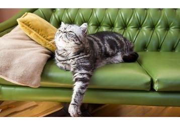 Изготовление, реставрация мебели в Симферополе – компания «Реммебель»: профессионально и доступно!, фото — «Реклама Крыма»