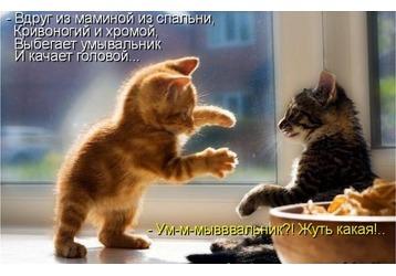 Севастопольские коты во  всемирной  интерактивной базе, фото — «Реклама Севастополя»