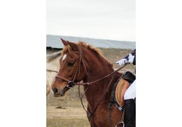 Прогулки, походы, фотосессии, свадьбы, детские праздники с лошадьми в Севастополе –конный дом «AРИОН», фото — «Реклама Севастополя»