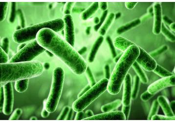 Анализ на дисбактериоз в Севастополе: где можно сдать, фото — «Реклама Севастополя»
